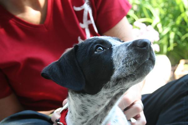 Dewey the Dog